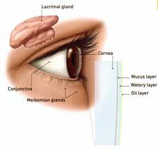 how to get rid of oil glands around eyes