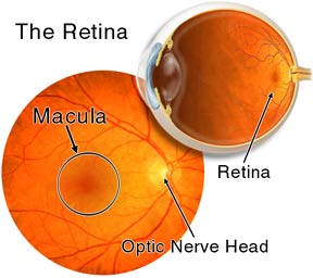 Image result for picture of retina